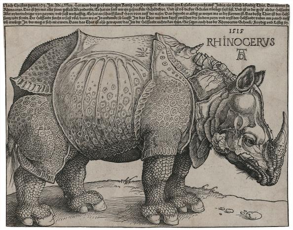 Durer Rhinoceros