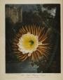 0-thornton-cereus
